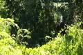 グアテマラ ティカル遺跡 世界遺産の動画 1449135