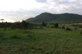 maasai,mara,national 1449696