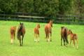 Horses Running 2613848