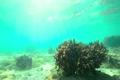 浅瀬のサンゴ 3801802