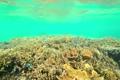 浅瀬のサンゴ 3801803