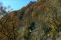 Autumn Leaves' Azuma Line Limited Express Train 4112852