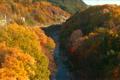 Suwa gorge of autumn leaves 4112853