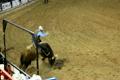 Rodeo horses show 4988768