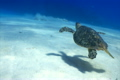 Turtle swimming underwater 4988969