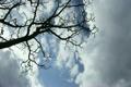 雲の流れと樹木 5138354