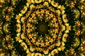 A pulsing kaleidoscope of fall foliage (Loop). 5352050
