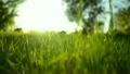 草地 草坪 绿色 6729902