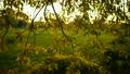 翠绿 雏菊 花园 6729969
