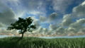 草地 草原 树木 6794363