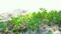 砂浜の草と日差し 6946435