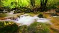 forest stream 6951768