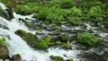 5月春 新緑のふきだし公園 北海道春景色 道南京極町 7682246