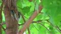 ปลวก,แมง,แมลง 7851140