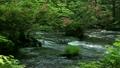 奥入瀬渓流に花咲く季節 8051082