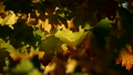 leaves, leaf, fall, autumn, foliage 8704352