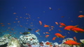 ปะการัง,ใต้ทะเล,ปลา 8801729