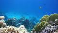 ในน้ำ,ปะการัง,ปลา 8801866