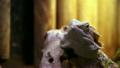 Iguana staring. 9053239