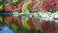 香嵐渓の紅葉 9056692