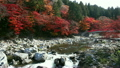 香嵐渓の紅葉 9056713