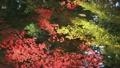 水面に映った紅葉と落葉の波紋 9144561