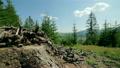 采伐森林 山峰 木头 9191847
