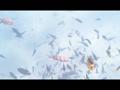 red sea snorkeling 9235300