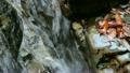 滝・淵 水の流れる音 9424264