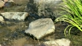 小川の風景 9728846