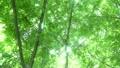 숲의 신록과 햇살 9760915