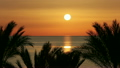 beautiful landscape with palms and sunrise over sea 10173444