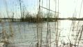 Sun shining brightly through reeds at shore in springtime 10288011