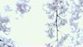 flower, naturals, sakura 10325573