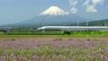 후지산과 화려한 꽃밭을 주행하는 신칸센 (하행) 00067 10736941