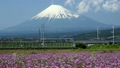 """【후지산 인터벌 촬영 영상] 봄의 꽃밭과 몇 분 간격으로 오가는 신칸센 """"줌""""2800 10876281"""