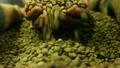 咖啡豆 咖啡 豆子 10903162