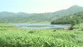 野反湖 ササ 11061431