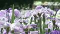 花葫蘆 11071328