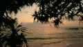 沖縄の夕景 11071363