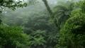 霧に煙るヤンバルの森林 11071368