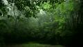 雨降るヤンバルの森林 11071371