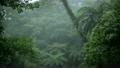 雨降るヤンバルの森林 11071372