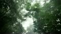 やんばるの森林 11071373