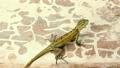 蜥蜴 跑步 运行 11215793