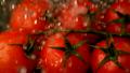 Water raining on cherry tomatoes 11236644