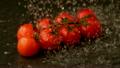 Water raining on cherry tomatoes 11236942