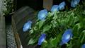 Heavenly Blue 12249055