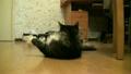 cat, rest, animal 12585621