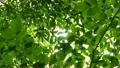 林 光 日光の動画 13559984